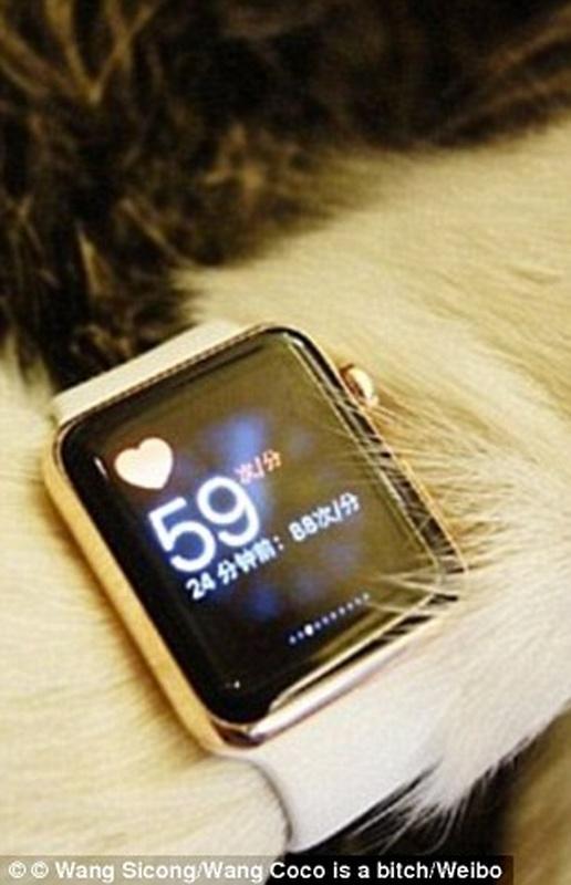 Thiếu gia Trung Quốc mua hẳn 8 chiếc iPhone 7 và iPhone 7 Plus cho chó cưng